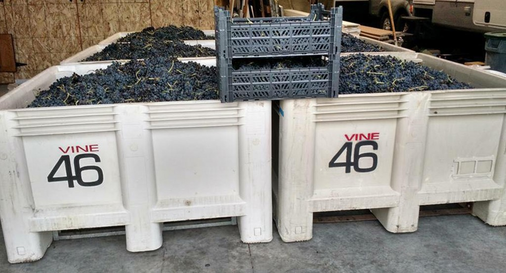 lewis-clark-valley-ava-vine-46-2